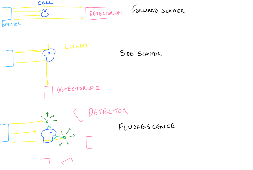 FACS Detection of Molecules and Cells