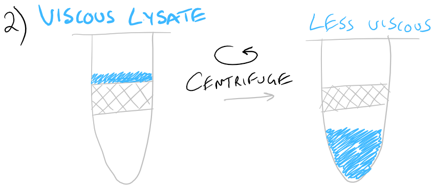RNA purification from protein and carboihydrate