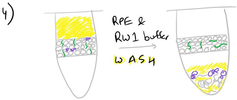 Purification of RNA with ethanol buffers