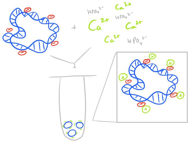 Calcium phosphate Nanoparticles and Aggregates