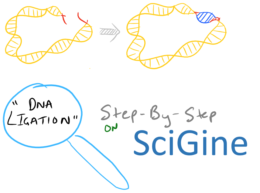 DNA Ligation of Sticky Ends