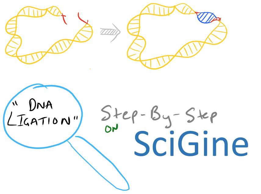 DNA Ligation of Sticky Ends
