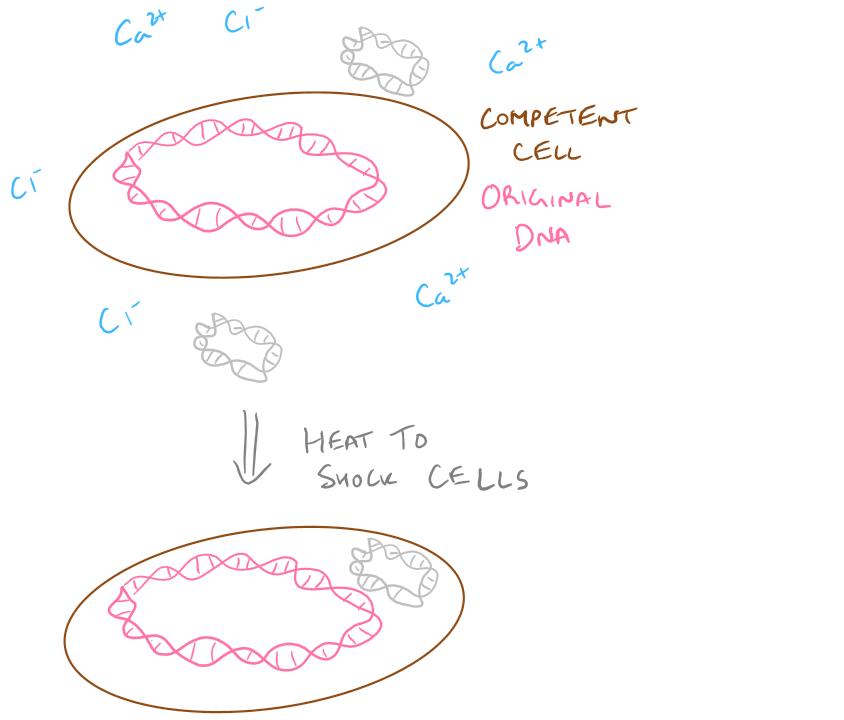 Transformation Biology