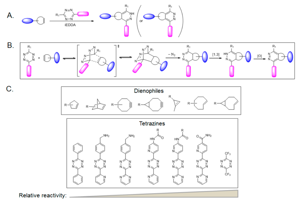 bioorthogonal click chemistry reactions with azide and cycloalkynes