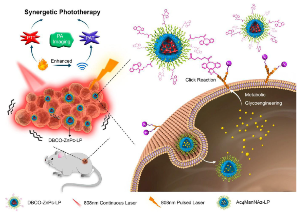 Copper free click chemistry used in two step tumor targeting